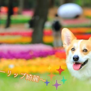☆ひたち海浜公園☆【2021年:チューリップ編】