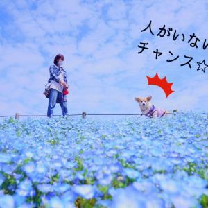 ☆ひたち海浜公園☆【2021年:青い世界】