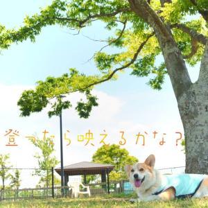 ☆大きな木の上で…☆