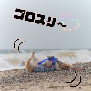 ☆稲毛の浜で…☆【MAY・2021】