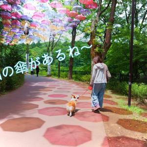 ☆ムーミンバレーパーク☆【アンブレラスカイ編】