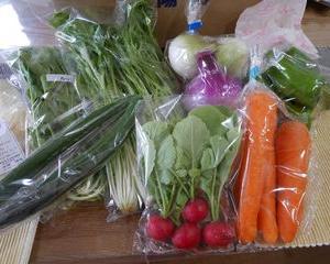 徳島県海陽町から野菜の詰め合わせが届きました!お買い物マラソンにも最適