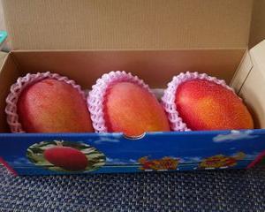 鹿児島県垂水市よりマンゴーが届きました!
