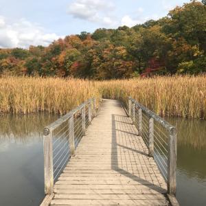 ニューヨーク 近郊秋のハイキング。紅葉もそろそろ見頃。