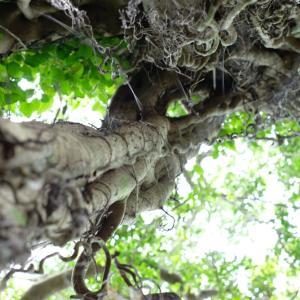木には気が宿る