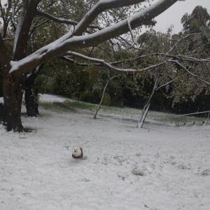 雪のくるみ広場