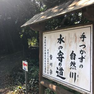 【沖永良部島】芋、ときどき晴れ。(な休日)