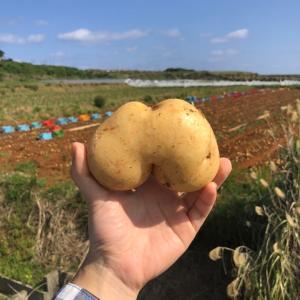 【沖永良部島】私から見たお芋と人々。驚きと感動、そして気づき。