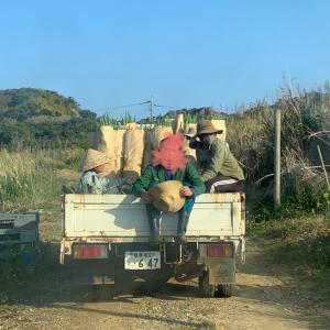 【沖永良部島】徒然なるままに花切りの日々とベトナム人の野生魂