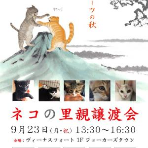 9/23(月・祝)お台場ヴィーナスフォートで里親譲渡会を開催!