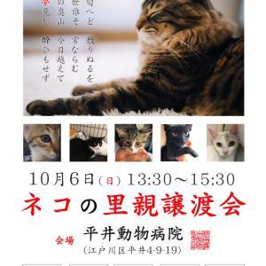 10月6日 (日) 13:30~15:30 平井で開催!ネコの里親譲渡会