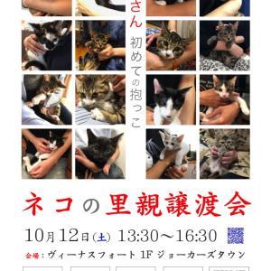 10/12(土)お台場ヴィーナスフォート ネコの里親譲渡会を開催!