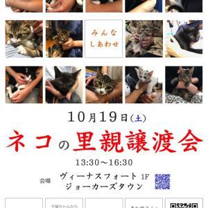 10/19(土) ネコの里親譲渡会を開催@お台場ヴィーナスフォート