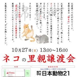 10/27(日) 錦糸町で!ネコの里親譲渡会だ!