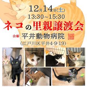 12/14(土) 平井で開催!ネコの里親譲渡会!
