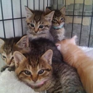 【子猫はつづくよ、、、 いつまで⁉️】