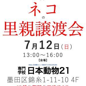 7/12(日) 錦糸町でネコの里親譲渡会(12:30〜受付開始)