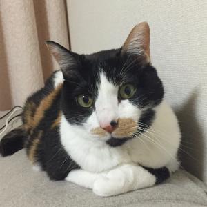【東京都福祉保健局からのお願いパンフレット】