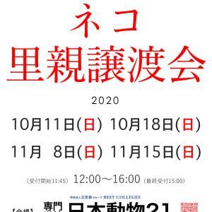 2020年10月/11月 東京 錦糸町 専門学校 日本動物21でのネコの里親譲渡会