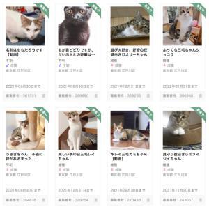 里親募集中の猫たちのご紹介と個別お見合いのご案内