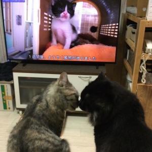 保護猫が里親様のおうちで暮らしたら…