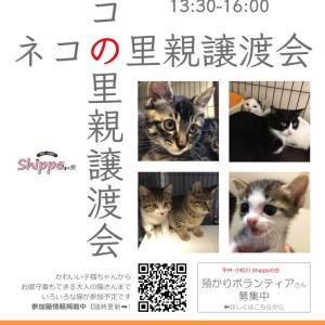 参加猫さん更新!7月14日(日)  保護猫の里親譲渡会@お台場ヴィーナスフォート