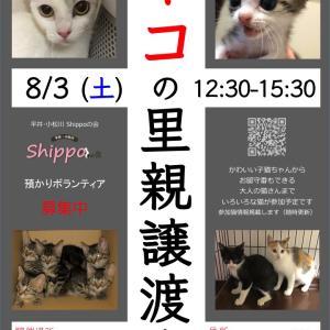 参加猫さん更新中!8月3日(土)ネコの里親譲渡会@船堀・北葛西