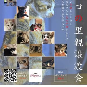 8月18日(日) ネコの里親譲渡会@お台場ヴィーナスフォート