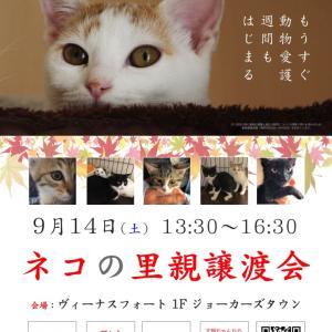 お知らせ:9/14(土)お台場ヴィーナスフォートで里親譲渡会を開催!
