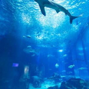 東京近郊の水族館ベスト5!!
