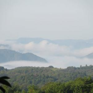 雲海の朝…ノラにゃんのご出勤