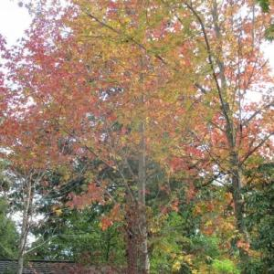 秋たけなわのガーデンとノラ