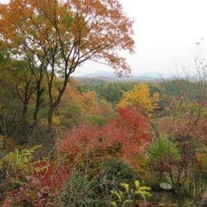 山庭の紅葉