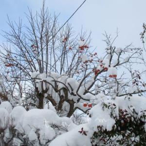 冬の地震!やね雪の重みで家が倒壊するかもと飛び起きた