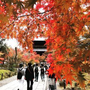 秋の京都を満喫☆エゴの洗脳から解放される旅