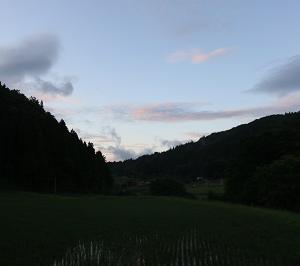 田んぼの中干しは夏至からか