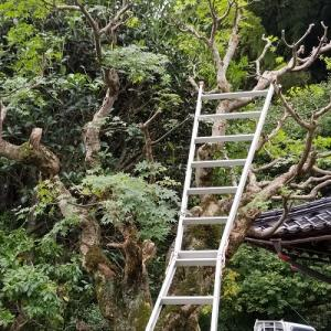 枯れ木も庭の賑わい