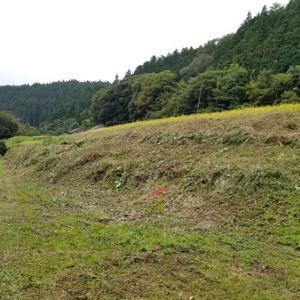 草刈り三昧で稲刈りスタンバイ