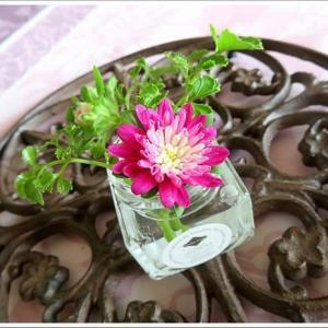 食卓の小さい花