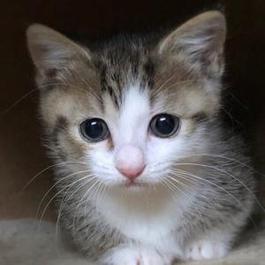 先天性骨格異常の子猫 愈史郎(ゆしろう)を助けて下さい。
