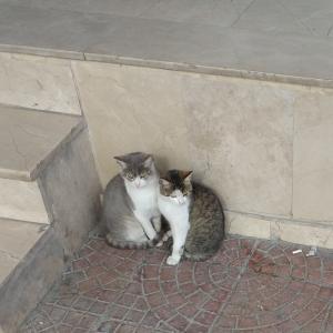 幼い兄弟猫の絆