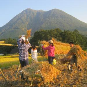 稲株を2列刈り残した。そのわけは。