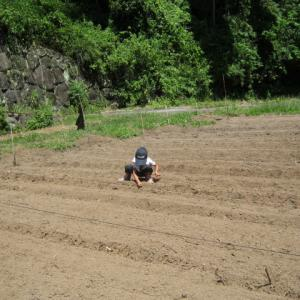小豆は土用の風に3日当てろ