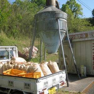 田んぼに米糠を撒きました。