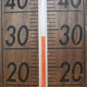 30℃超えの日は、梅の選別。