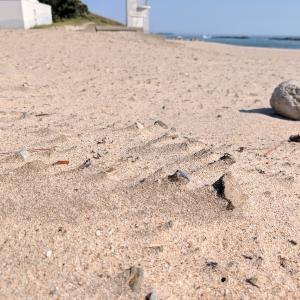 夏の忘れ物(台風後の砂浜で)