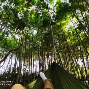 Hammockers #060( Bamboo forest  )