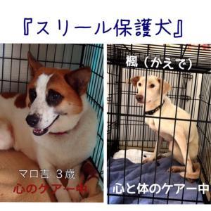 静岡県宇佐美からの逃走犬