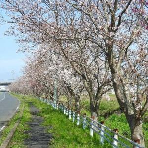 散歩路の風景