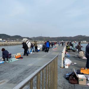 豊浜釣り桟橋 イワシ爆釣の代償